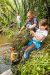Stu Muir and Kim Jobson, netting pest Koi Carp fish from the Waikato River wetland, with kids Hazel and Sandy, Aka Aka, Franklin (54057QF00)