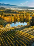 Stone fruit orchards and grape vines at Blackmans on an autumn morning with mist over the Clutha (Mata-Au) River and Clyde beyond. Hinton's orchard in front. Aerial view, Earnscleugh, Alexandra, Central Otago (54382GH00)