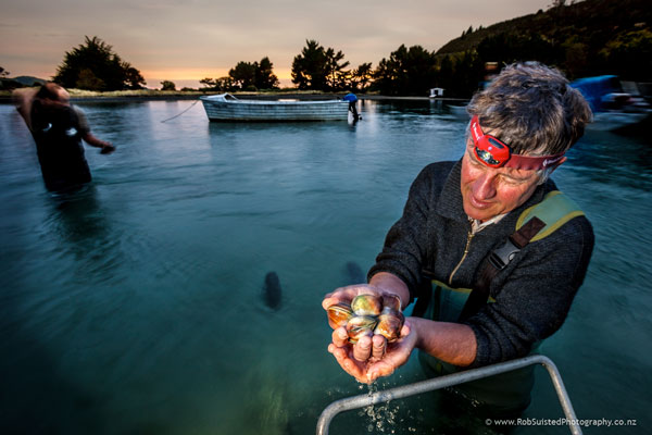 Roger Belton (founder of Southern Clams Ltd) checking clams harvested at dawn. Story portrait by Rob Suisted