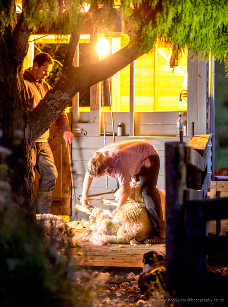 Emily and Sam Welch, record holding shearers on their home stand, under a rimu tree. Story portrait by Rob Suisted