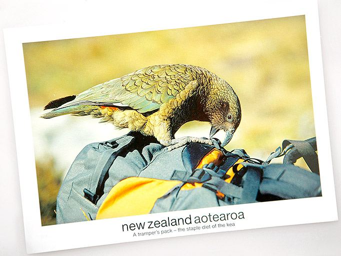 Kea postcard 2