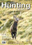 New cover of a young wapiti bull...