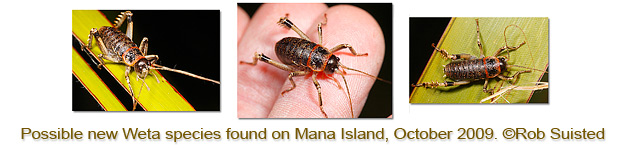 Weta Discovery Mana Island, Rob Suisted
