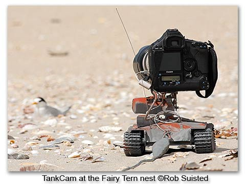 TankCam at the Fairy Tern Nest ©Rob Suisted / www.naturespic.com