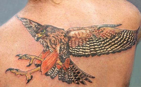 NZ Falcon photo tattoo
