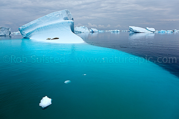 Crabeater seals in Antarctic iceberg graveyard. Booth Island