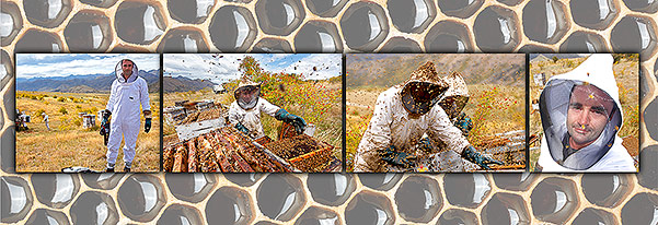 Photographing the Bush's collecting honey. An extreme exercise in photography. Click for larger photo