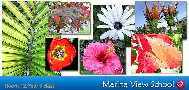 Photos from Marina School Room 12