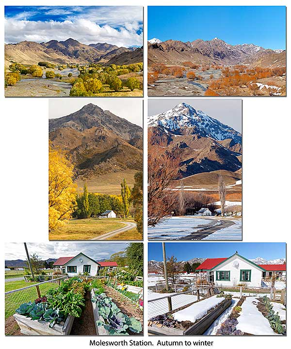 Molesworth Station seasonal contrast. Click to enlarge